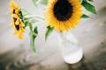 Картинка подсолнухи, цветы, желтые, лепестки, ваза