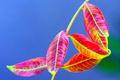 Картинка растение, листья, осень, ветка, цвет