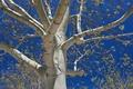 Картинка небо, ветки, дерево
