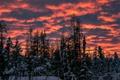 Картинка зима, небо, облака, снег, деревья, закат