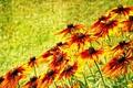 Картинка природа, фон, цветы