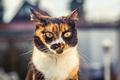 Картинка глаза, кот, взгляд, фон