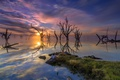 Картинка деревья, закат, озеро