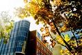 Картинка листья, лучи, город, дерево, здание, окна