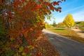 Картинка осень, листья, деревья, парк, дорожка, багрянец