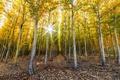 Картинка осень, лес, деревья