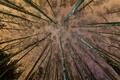 Картинка лес, небо, деревья