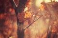 Картинка осень, листья, макро, свет, ветки, блики, листок