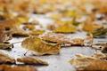 Картинка природа, осень, листья