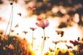 Картинка макро, Цветы, солнце