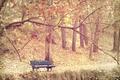 Картинка осень, парк, скамья, туман