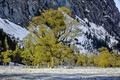 Картинка листья, снег, деревья, горы