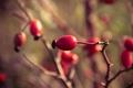 Картинка ягода, цветы, flowers, красный