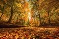 Картинка листья, осень, природа