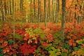 Картинка осень, лес, трава, листья, деревья, краски, кусты