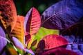 Картинка цвет, растение, макро, листья, осень