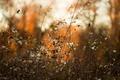 Картинка осень, природа, фон