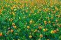 Картинка луг, поле, трава, цветы