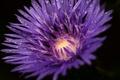 Картинка цветок, макро, сиреневый, васелек