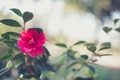 Картинка цветок, листья, лепестки