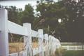 Картинка trees, fence, rainy