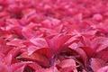 Картинка листья, розовые, много
