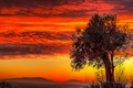 Картинка небо, облака, горы, дерево, зарево