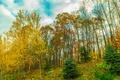 Картинка осень, небо, облака, деревья, камни, Склон