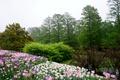 Картинка деревья, цветы, сад, тюльпаны, США, кусты, Pennsylvania