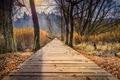 Картинка мост, осень, листья