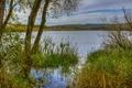 Картинка деревья, берег, Германия, кусты, Ulmen