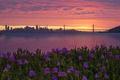 Картинка цветы, ночь, город, San Francisco