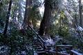 Картинка лес, снег, деревья, ветки, парк, Канада, лестница