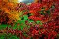 Картинка осень, трава, листья, краски, багрянец