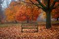 Картинка туман, деревья, листья, скамейки, листва, птица, ветки