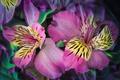 Картинка лепестки, растение, природа, цветы