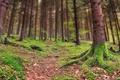 Картинка лес, мох, склон, деревья