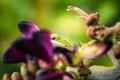 Картинка цветок, макро, сиреневый, ящерица, зеленая
