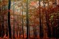 Картинка листья, лес, осень, деревья, природа