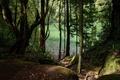 Картинка лес, деревья, озеро, Португалия, Sao Miguel, Congro