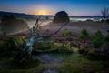 Картинка ночь, туман, дерево
