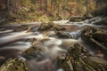 Картинка поток, лес, река, вода, природа