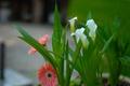 Картинка листья, лепестки, сад, клумба