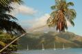 Картинка море, горы, тропики, пальмы, побережье, яхты, Французская Полинезия