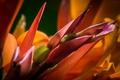 Картинка цветы, лепестки, экзотика