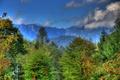 Картинка лес, облака, деревья, горы