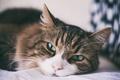 Картинка глаза, кот, шерсть