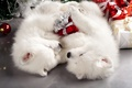 Картинка собаки, праздник, новый год, мило, рождество, щенки, пара