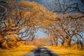 Картинка цвет, дорога, деревья, природа