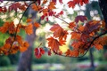 Картинка осень, листья, деревья, ветки, парк, клен